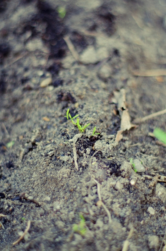 cuvry spring-20
